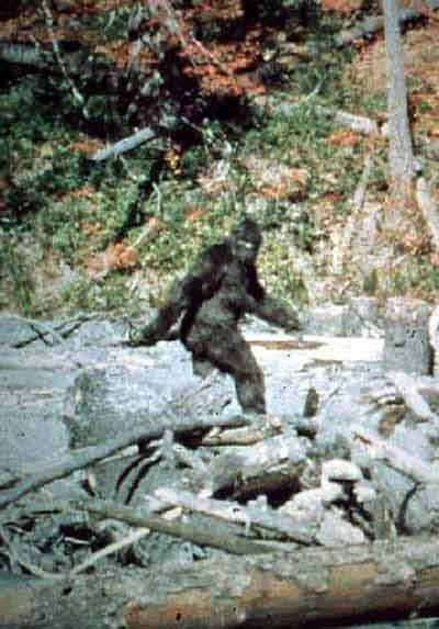 The most famous Bigfoot sighting. Image from the Patterson film. The footage has never been conclusively proven to be faked and many believe the gait and mass of the creature could not be easily fabricated.