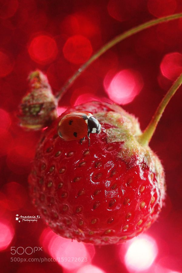Lady Red by Anastasia-Ri