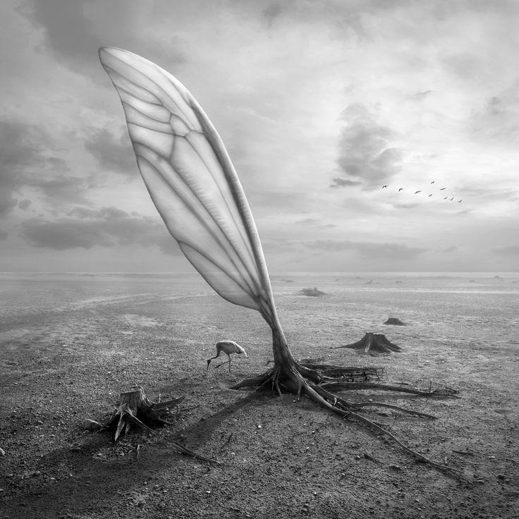 Wingland by Dariusz Klimczak on 500px