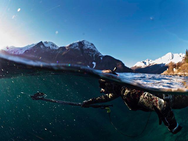 @jrwolfftreni spearfishing in Norwegian Fjords #dykking #freediving #diving #fridykking #underwaterphotography  #frivannsliv #em5mkll #olympus #underwater #olympuscamera #olympusunderwater #freedivephotography @olympusnorge #olympusnorge #adventure #olympusfreediving #naturephotography  #fishing #spearfishing #spearo #fjords #norwegianfjords #norway #fjordnorway #møre #visitnorway #freedivingart @simenwilberg @hamamar @jrwolfftreni @roooys91 @frivannsliv
