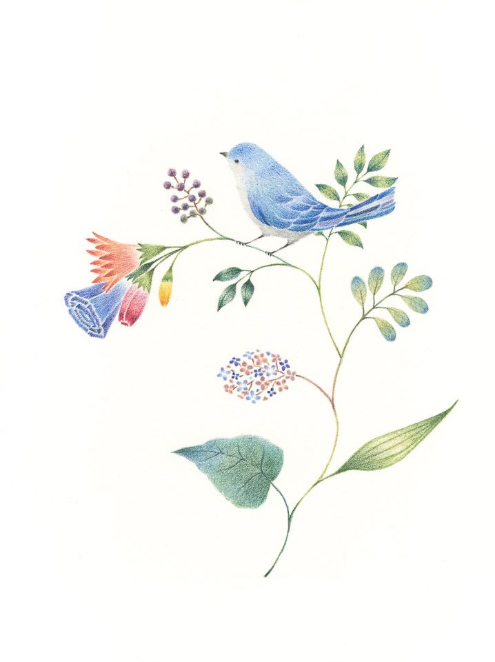 """Little Blue Bird and Flowers"" −RiLi, picture book, illustration, design…"