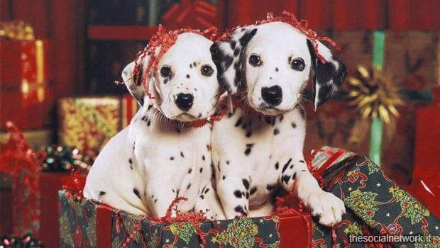 Coppia di Cani Dalmata Auguri di Natale 2013 su Facebook