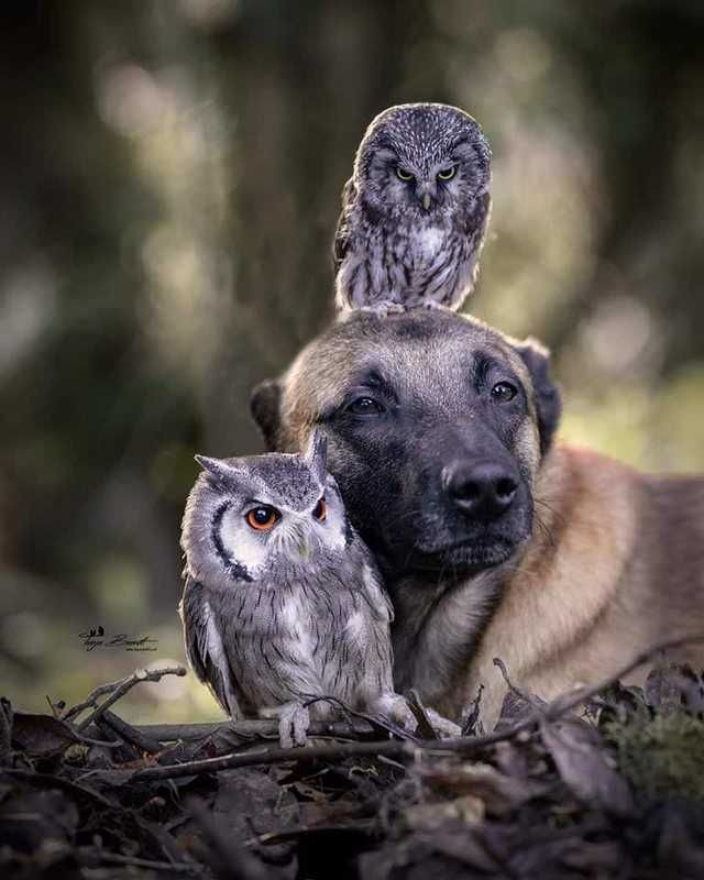 Ingo and his best friend Poldi, the owl | Dream World