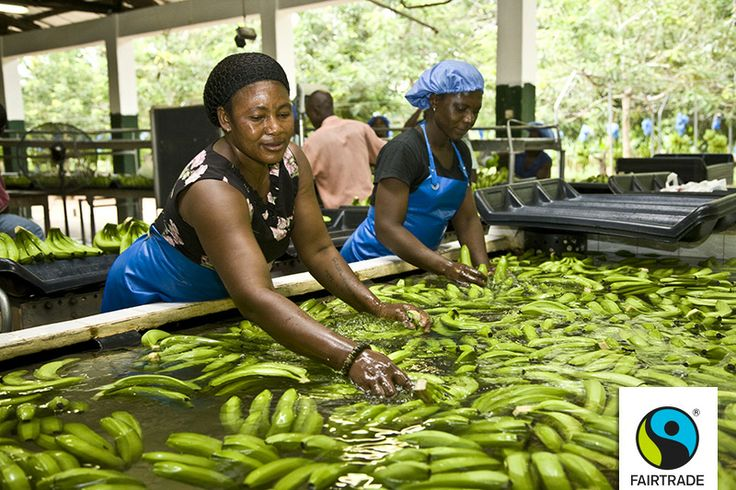 """""""Our work is far from over. This new Standard provides the support framework, and we have to work hard to make sure workers have the capacity and the freedom to negotiate fairer workplaces,"""" says Wilbert Flinterman, Senior Advisor on Workers' Rights and Trade Union Relations at @Fairtrade Intl Intl, #Fairtrade"""