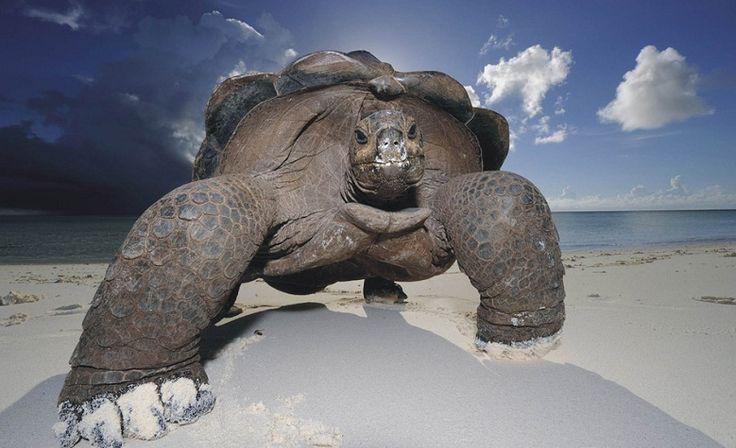 Tortoise! :D
