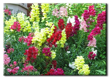 Behnke Nurseries - Garden Center, Landscaping and Florist
