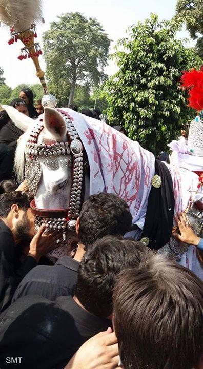 Shabih-e-Zuljinah - Wah Cantt Pakistan  (10 Muharram 1438 / 2016 - Wah Cantt Pakistan)  Photography: Sadaf Haider  Shia Multimedia Team - SMT http://ift.tt/1L35z55