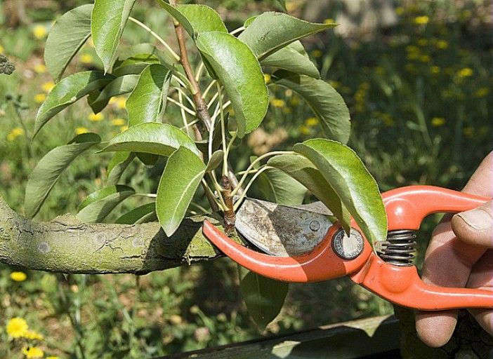 Calendrier de taille des arbres fruitiers pour toujours savoir quans tailler l'abricotier, le pommier, le pêcher... - F. Marre - Ecole du Breuil - Rustica