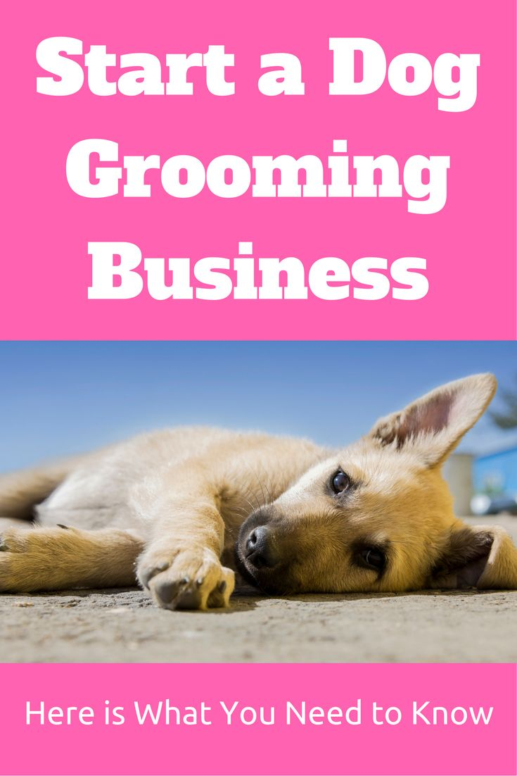 If you are wondering how to start a dog grooming business, then this article will walk you through what you should think about.  Visit at http://startalocalsmallbusiness.com/start-a-dog-grooming-business-today/