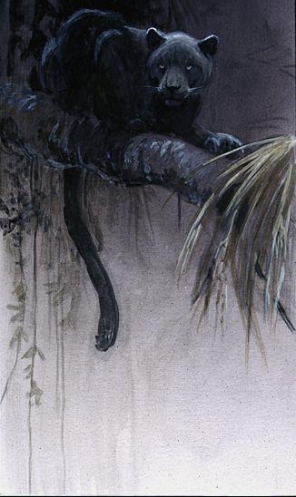 Artist/Naturalist ROBERT BATEMAN (Canadian: 1930) | Painting Black Jaguar (1992) #painting #Art pls visit us https://www.facebook.com/skalapeter7 ♡