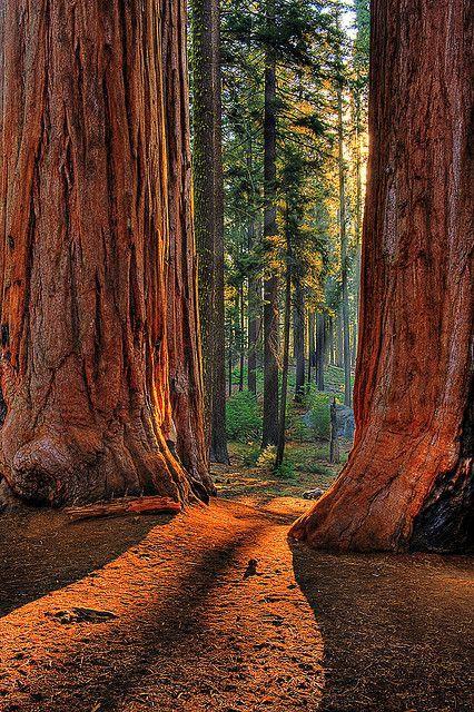 ❤️ national parks