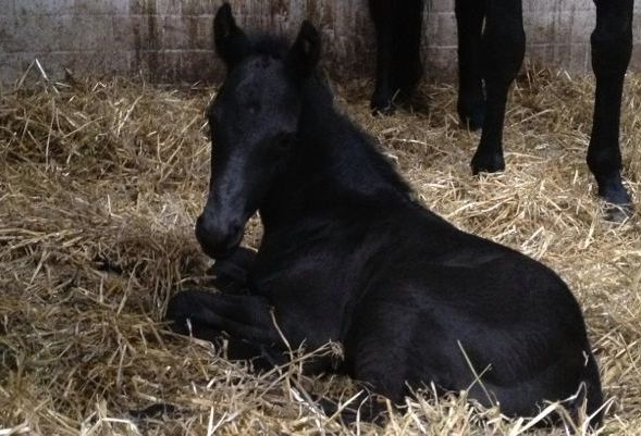 Another member of the Romney clan at just one hour old!