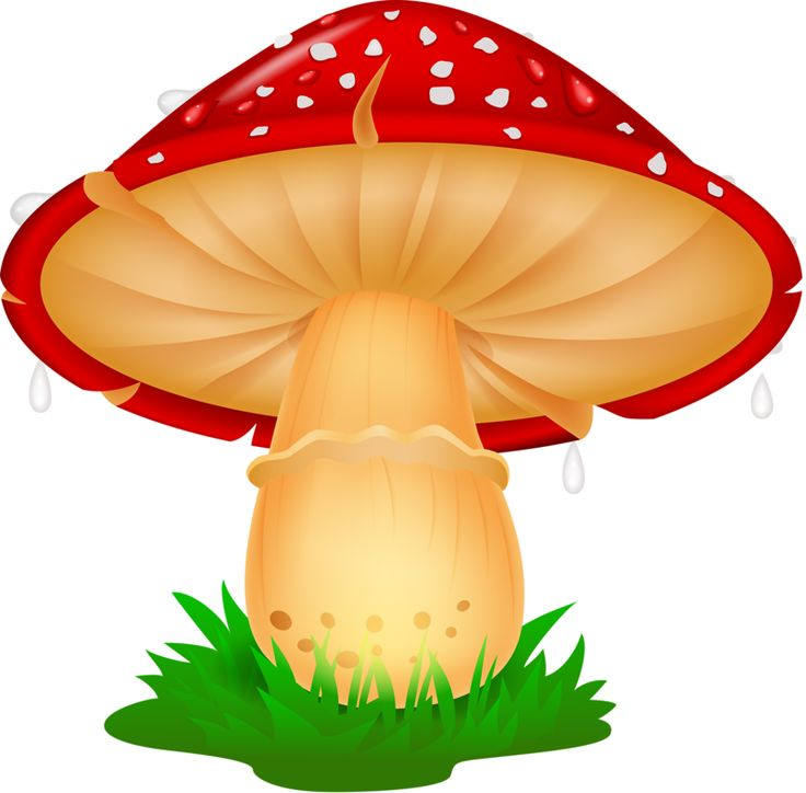70 best mushrooms images on pinterest fungi mushrooms and mushroom rh pinterest co uk  fungi clipart