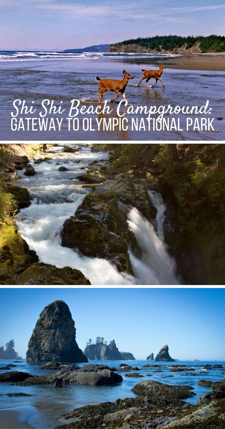 The perfect home-base for your Olympic National Park adventure.