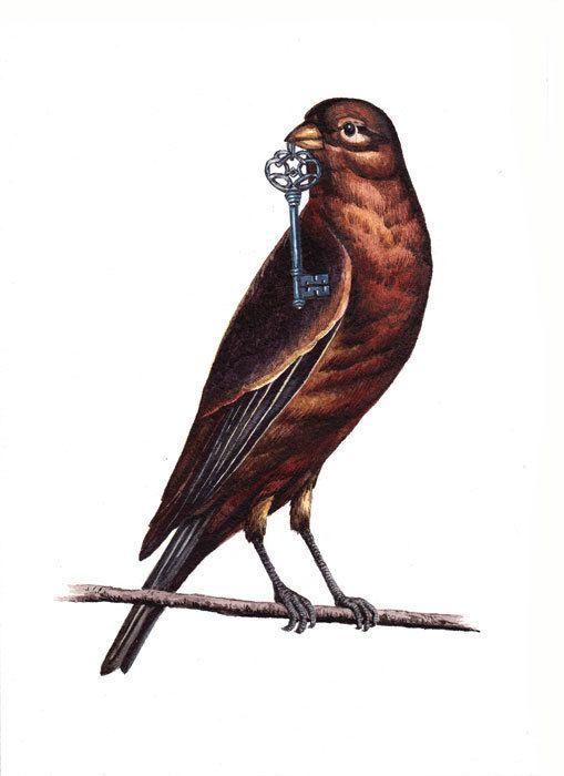 птицы в ключе в картинках все