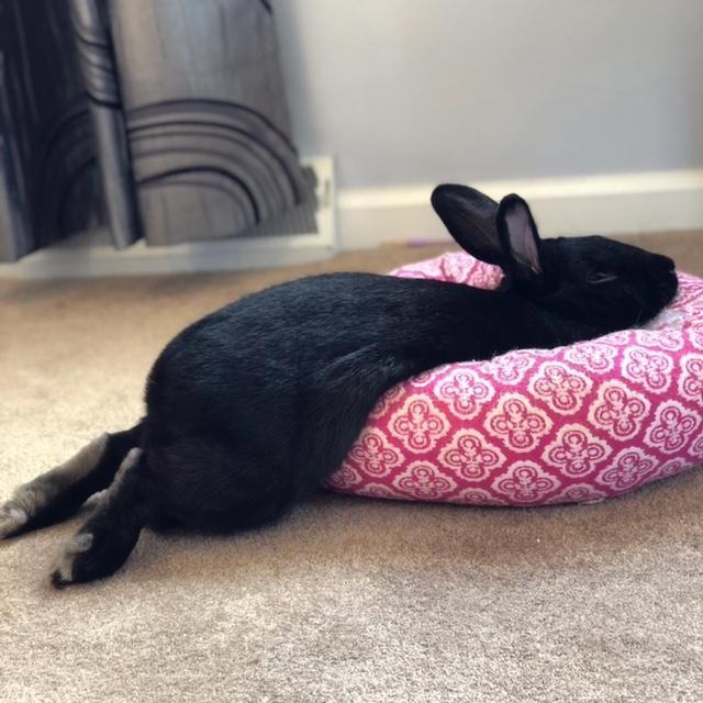 Фото усталого кролика с приколом