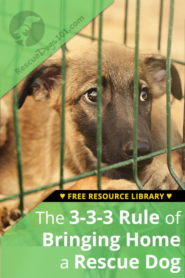 Tips For Bringing Home A Rescue Dog And The 3 3 3 Rule Adoptdontshop Dogstuff Puppy Dog Rescuedogs101 Rescue Dogs Rescue Puppies Dog Care