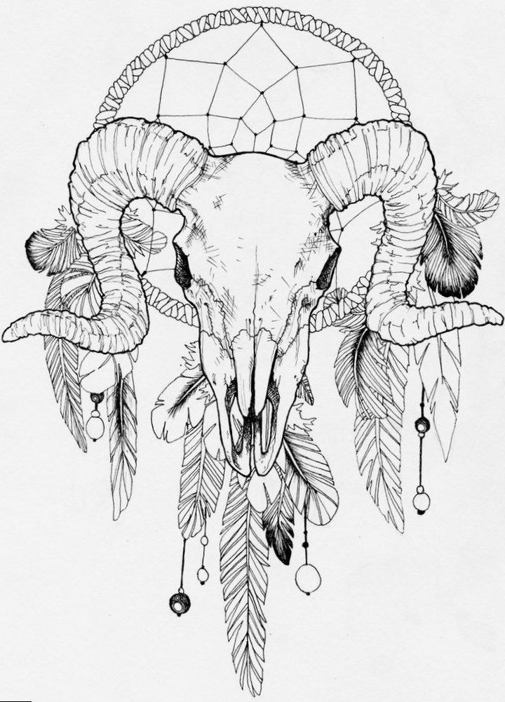 Черепа животных рисунки черно белые