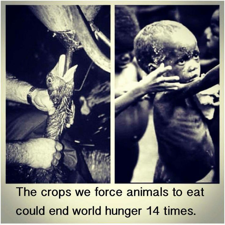 help end world hunger, go vegetarianism or at least eat as little meat as possible espically cow,pig and sheep