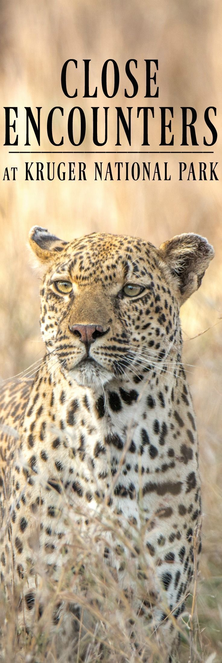 Two ways to see africa s big five at kruger national park