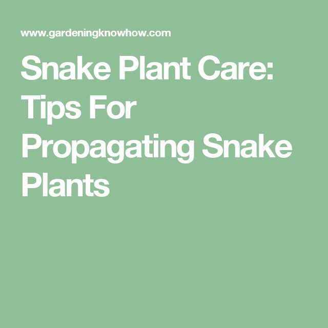 25 best ideas about snake plant care on pinterest snake plant mother 39 s tongue plant and. Black Bedroom Furniture Sets. Home Design Ideas