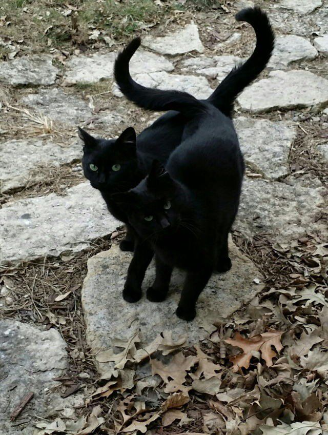 Black cats are beautiful....