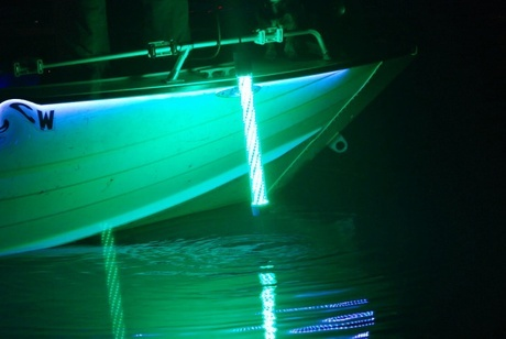Good SuperNova LED Fishing Lights In Action!