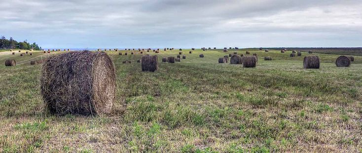 ~Hay rolls, Prince Edward Island | by Derek Mellon~ or Mr Silas Sloane's back fields in Avonlea!