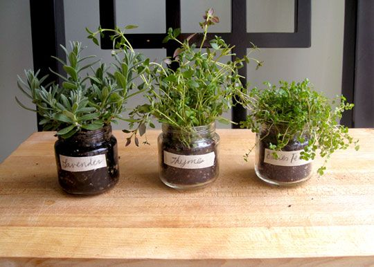 mini herb garden made out of baby food jars