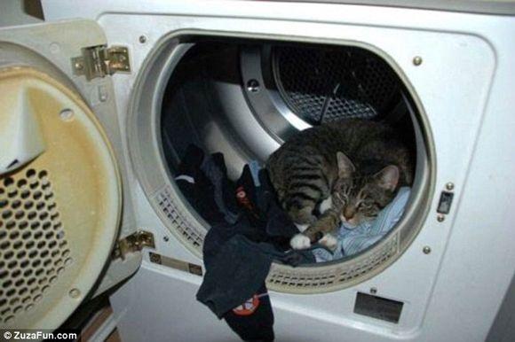 """NOTICIAS, FOTOS Y VIDEOS CURIOSOS  """"EN FOTOS, EL SUEÑO DE LOS GATOS""""   ¿Quiere ver algo enternecedor? ¡Mire estos gatos! Los mininos son conocidos por dormir en cualquier parte, pero estas imágenes superan las expectativas. A partir de este momento, sabrá que pueden dormir sobre una rejilla, bajo una frazada, hechos un etcétera y hasta dentro de una lavadora. Incluso, junto a un perro."""