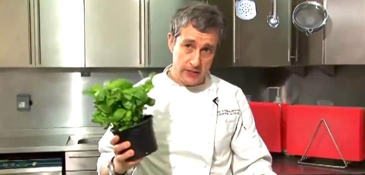 Tips On How To Store Basil In The Kitchen For Quick Use Video #Basil #Cooking #HillBillyHouseWife