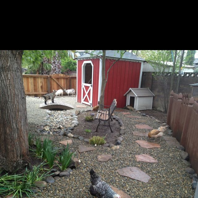 My backyard goat pen in suburbia!  Chickens are turned loose to keep the goats company!