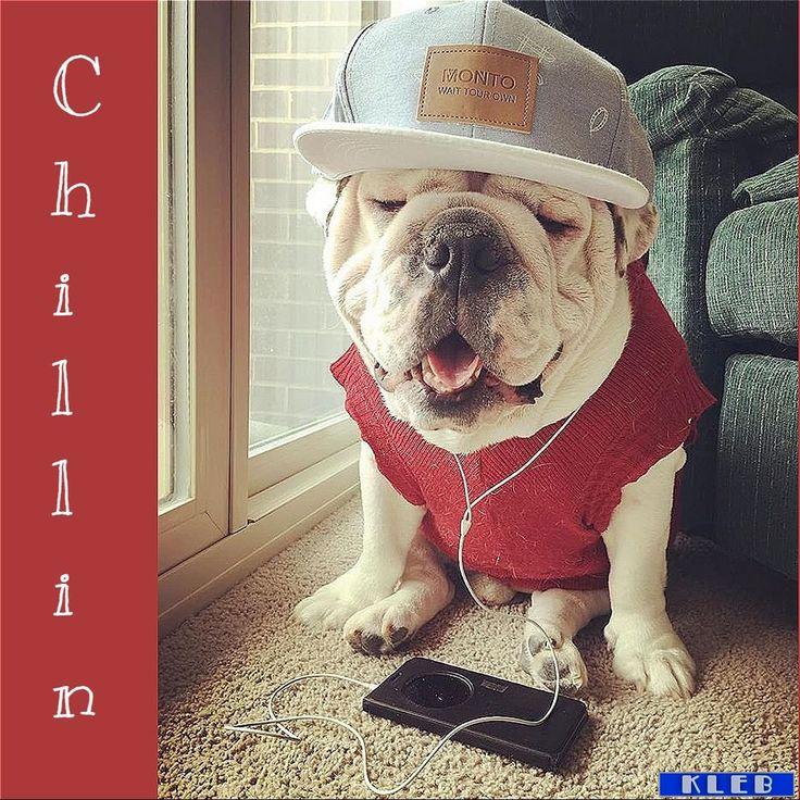 Chillin!  https://t.co/gtLTq7wkFo #pinterest https://t.co/VnnnNDOeD5