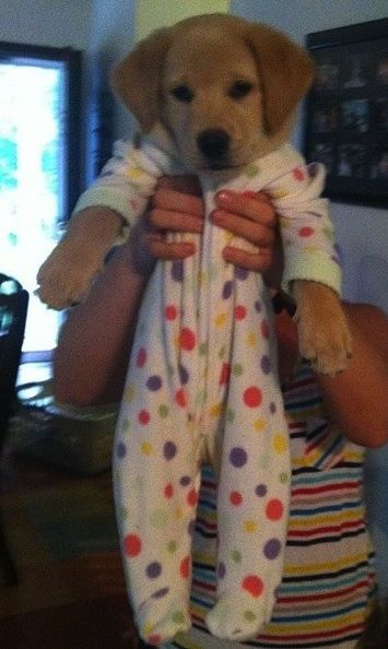 Puppy onesies - No....this is not ok.   Dogs are NOT HUMAN! Is there a diaper under that outfit? Seriously? Get over it people!
