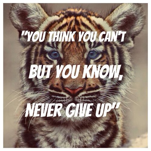 Pinterest Animal Quotes: ~Tiger Quotes~ You Think You Can't But You Know, Never