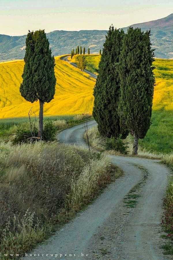 Country road by the cypresses (Tuscany, Italy) by Bart Ceuppens