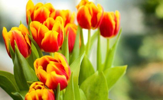 Fiori primaverili da vaso: 10 fiori per portare la primavera in casa! | Giardinieri in affitto