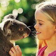 Koala feeding at Billabong Koala and Wildlife Park