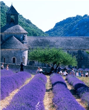 Senanque Abbey, 12th-century Cistercian abbey in the Vaucluse, near Gordes.