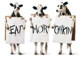 Image Detail for - Eat Mor Chikin – Funny Cows Ads