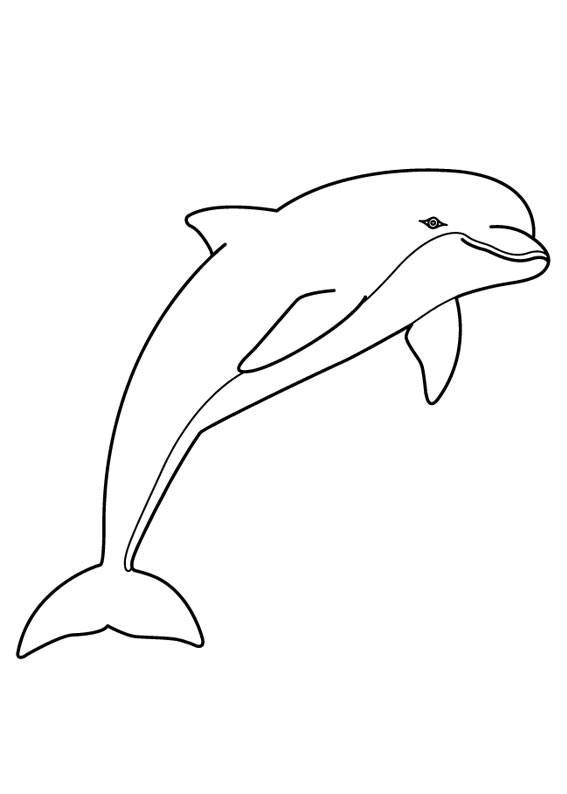 30 Disegni Di Delfini Da Colorare Fai Da Te Delfini Disegni E