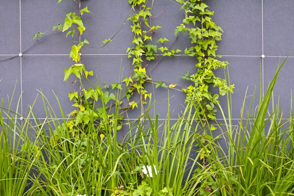 Why install a green wall? #environment #sustainableliving #LEED #business parks #garden