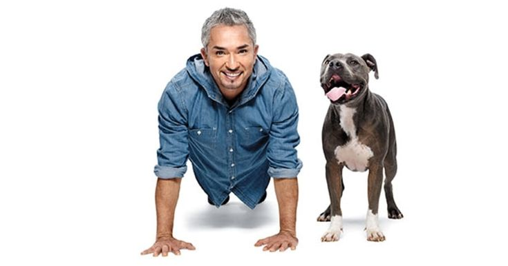 The Dog Whisperer on leadership, integrity, and the purity of canine devotion.