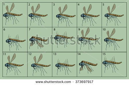 cartoon vector crane-fly animation fly. Game icon funny flying insect. Vector design for app user interface.