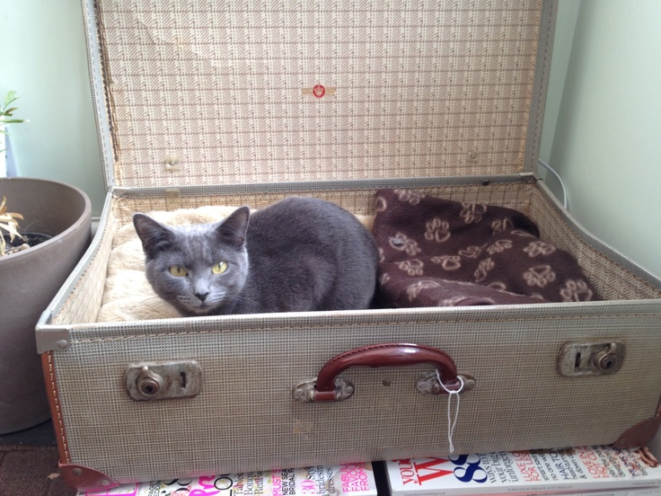 17 best ideas about homemade cat beds on pinterest