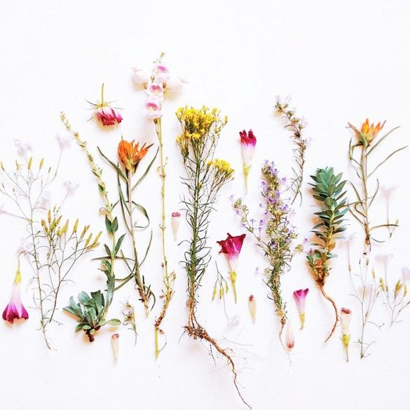 11 Instagram Accounts to Follow If You Love Flowers via @domainehome