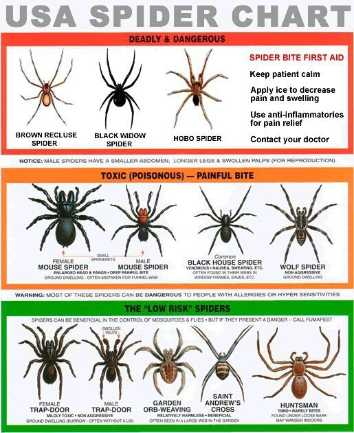 The only poisonous spider that I knew lived in my area was the Black Widow, until my wife was bit by a Hobo. It was awful.