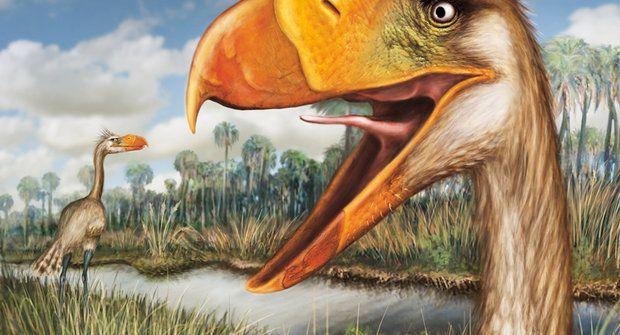 Skutečný hrůzopták: Přerostlé masožravé kuře