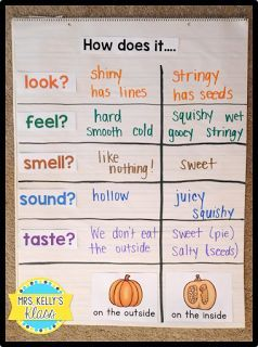Explore 5 senses with the inside and outside of a pumpkin!