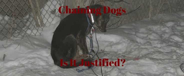 Chaining Dogs | Pet Quest